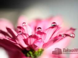 Причины богобоязненности (такуа)