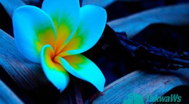 religiozno-pravovoe-reshenie-ob-izmenenii-cveta-kozhi-s-temnoj-na-bolee-svetluyu