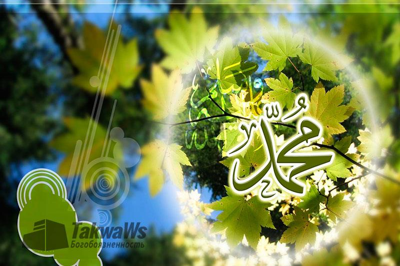 Повиновение пророку Мухаммаду (мир ему и благословение)