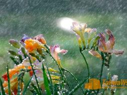 Слезы кающегося утоляют жажду и лечат болезнь