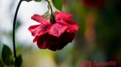 otvety-na-voprosy-ochishheniya-i-menstruacij-vo-vremya-namaza