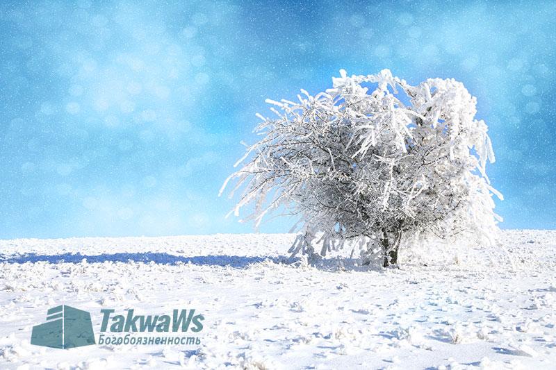 Некоторые законоположения, связанные с зимним периодом и дождем