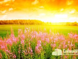 Земной поклон при допущении ошибок в молитве (Саджда сахуа)