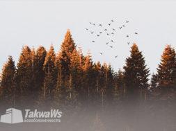О разновидностях козней шайтана (упущение и излишество)