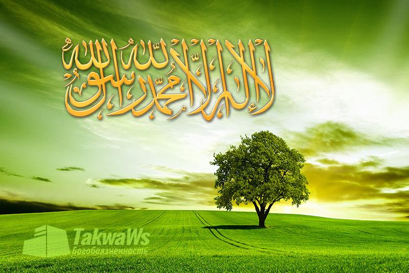 Вкратце о пути саляфов из Корана, Сунны и слов сподвижников