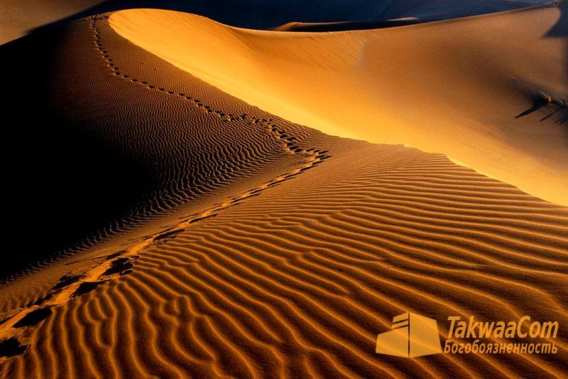 Пророк Муса (мир ему): Скитание по пустыне и кончина пророка